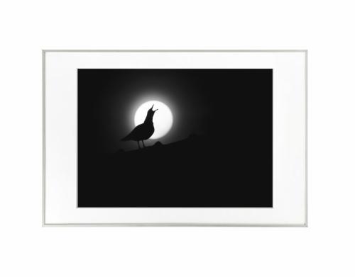 1 - Lua cheia com silhueta de gaivota